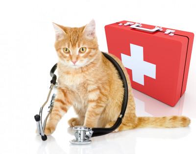 10-emergencies-vet