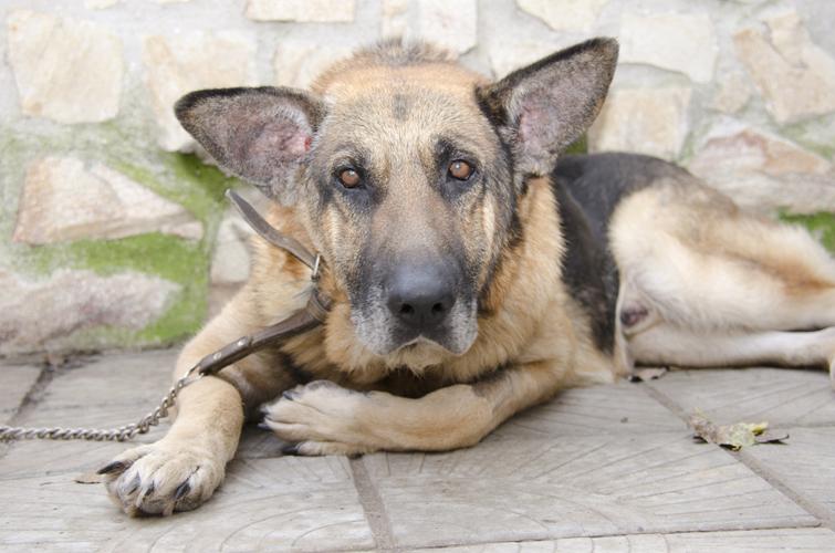 Куче Рекси