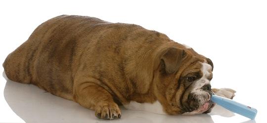 dog-has-diarrhea